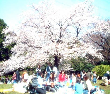 駒沢公園 | 公園 | お散歩 ...